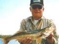 Glen - 20 inch Walleye