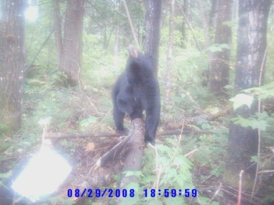 normal_Trail cam-5