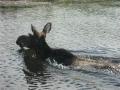 Dauner Fishing Trip - 2008 023